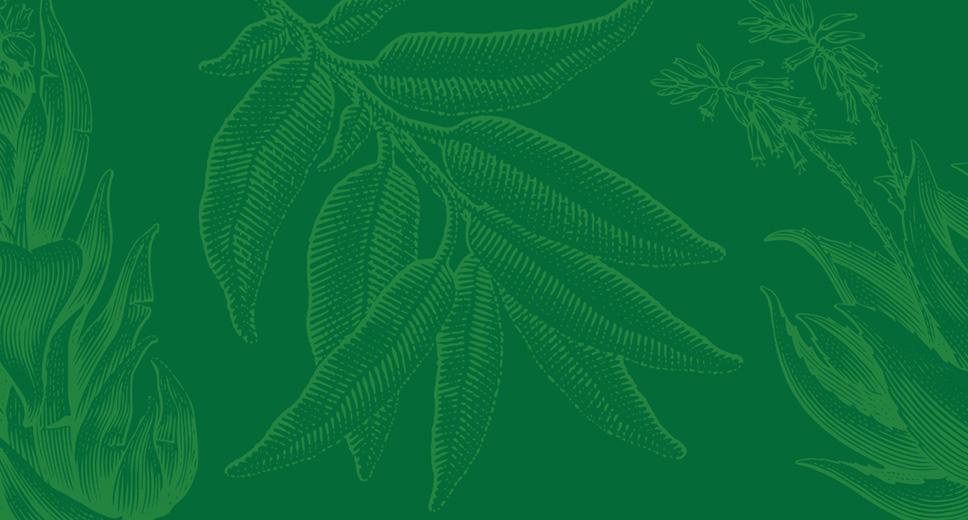 Plant Finder Background